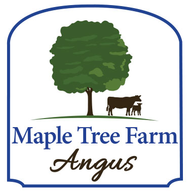 Goehre Creative's latest custom logo design for Maple Tree Angus Farm